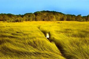 Ruộng cói Nga Sơn